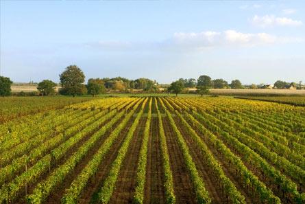 Domaine Benoit Rocher - Vins d'Anjou